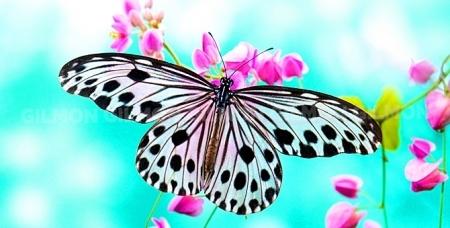 """Посещение """"Парка живых тропических бабочек"""" в ТРК """"Куба"""". Прикоснитесь к миру прекрасного!"""